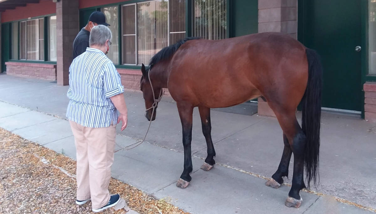 Horse wandered in to Zuni School